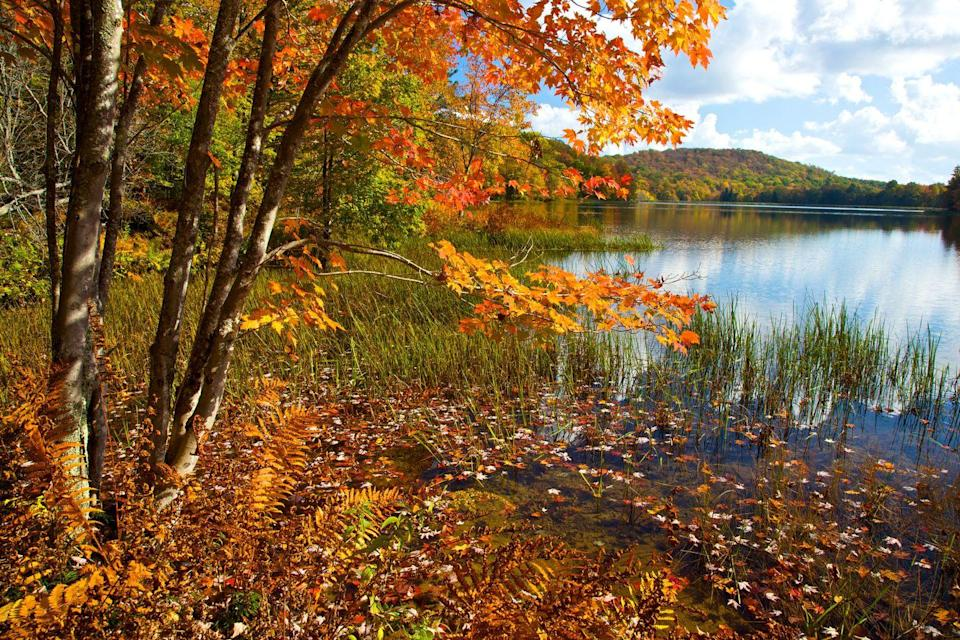 """<p>With annual <a href=""""https://www.visitdeepcreek.com/pages/FallFoliageDrivingTours"""" rel=""""nofollow noopener"""" target=""""_blank"""" data-ylk=""""slk:fall foliage driving tours"""" class=""""link rapid-noclick-resp"""">fall foliage driving tours</a> and an <a href=""""https://www.visitmaryland.org/event/autumn-glory-festival"""" rel=""""nofollow noopener"""" target=""""_blank"""" data-ylk=""""slk:Autumn Glory Festival"""" class=""""link rapid-noclick-resp"""">Autumn Glory Festival</a>, Garrett County, Maryland makes it almost too easy to enjoy the seasonal views. This year, the festival is scheduled to take place from October 7 to October 11.</p>"""