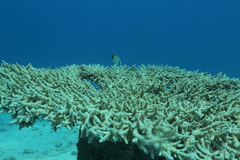 Coral reefs are home to a vast range of marine life (AFP Photo/MENAHEM KAHANA)