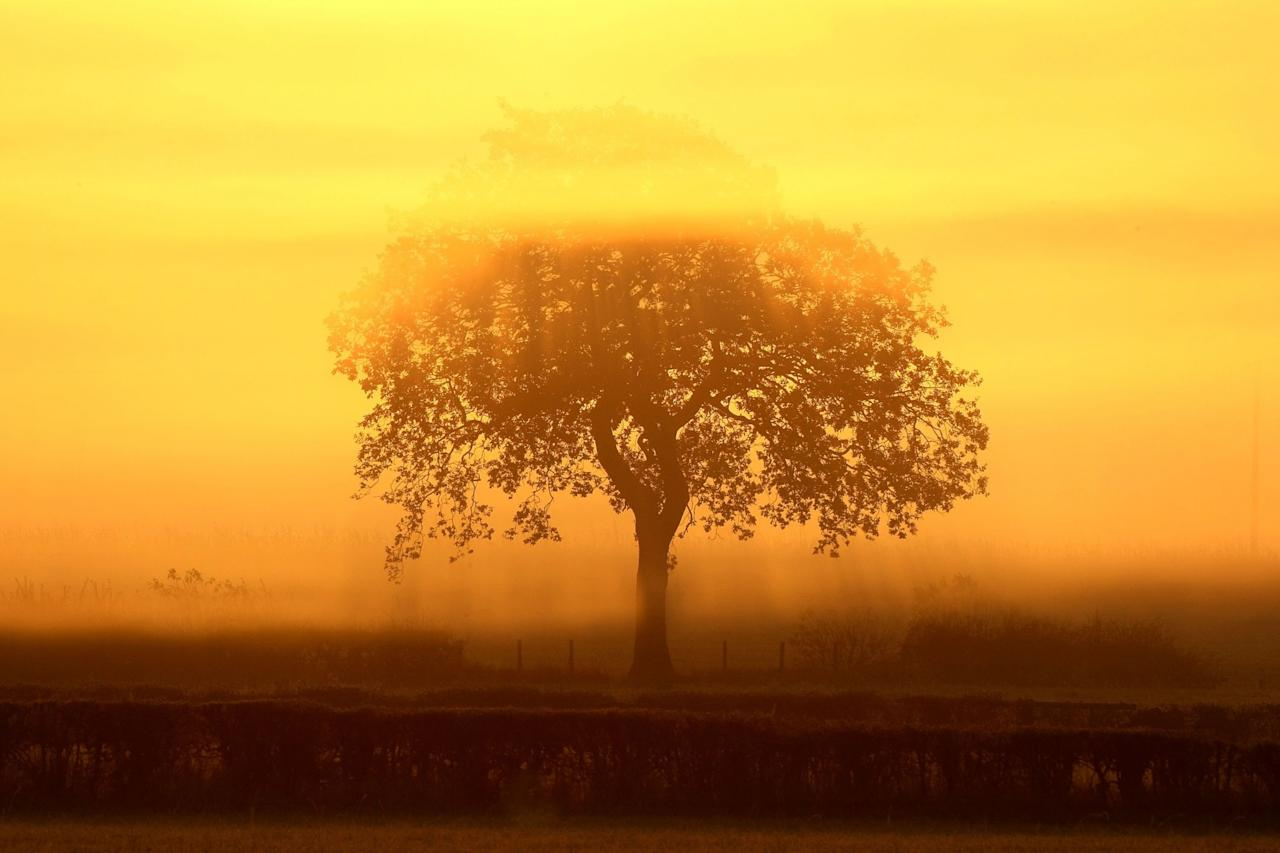 <p>A striking silhouette from the early morning in Knutsford, Cheshire [Getty] </p>