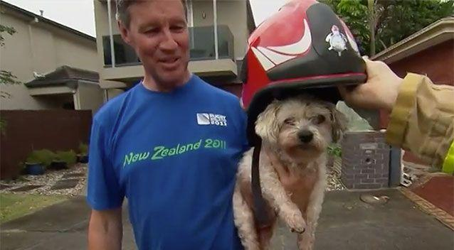 Lucy, a blind and deaf dog, has survived a house fire in Victoria. Source: 7 News