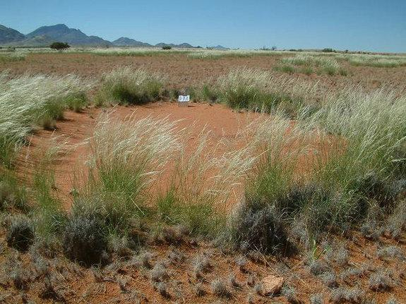 Mysterious African 'Fairy Circles' Stump Scientists