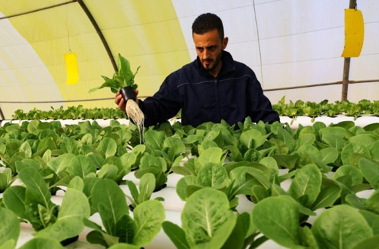 Mounir and his partner Siraj Bechiya are pioneering hydroponic farming in a small town 40 km outside the Libyan capital Tripoli