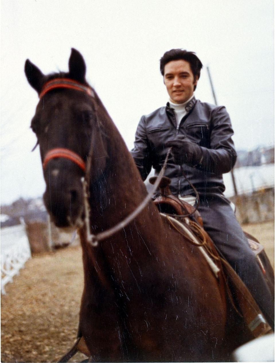 "<p>Elvis was a prolific rider throughout his life and loved horses. The estate had a large barn when he purchased it, but it wasn't until the late '60s that the singer began filling the stalls with various equines. Because the singer's <a href=""https://homeaddict.io/a-look-inside-graceland-elvis-amazing-estate/17/"" rel=""nofollow noopener"" target=""_blank"" data-ylk=""slk:favorite horse was a Palomino"" class=""link rapid-noclick-resp"">favorite horse was a Palomino</a>, to this day the estate always has a Palomino in the barn. </p>"