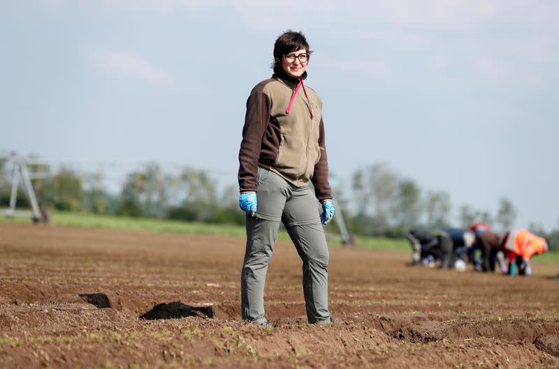 Laid off Hungarians turn to truck driving, carrot picking