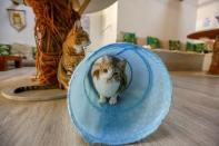 Cat Cafe offers therapy to human and adoption to cats in Dubai