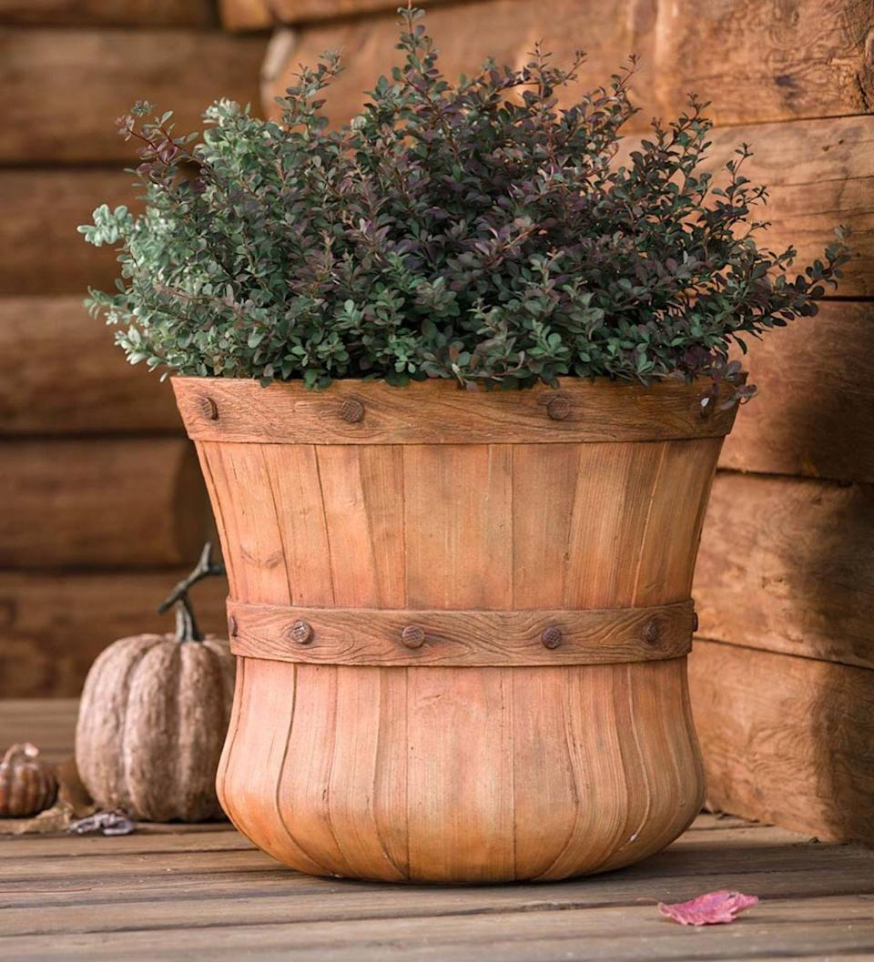 barrel planter, fall planting tips