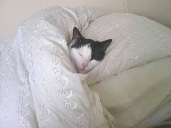 This exhausted kittie looks almost human as it sleeps between the sheets.