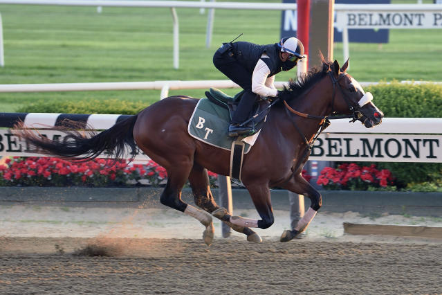 In this Sunday, June 14, 2020, photo provided by Coglianese Photos, Tiz The Law trains at Belmont Park in Elmont, N.Y. Tiz the Law looks every bit like the best 3-year-old in the world and is the Triple Crown favorite, so it'll take something spectacular from a watered-down field to prevent him from becoming the first New York-bred horse to win the Belmont in over 130 years and take a powerful stride toward the Kentucky Derby. (Susie Raisher/Coglianese Photos via AP)