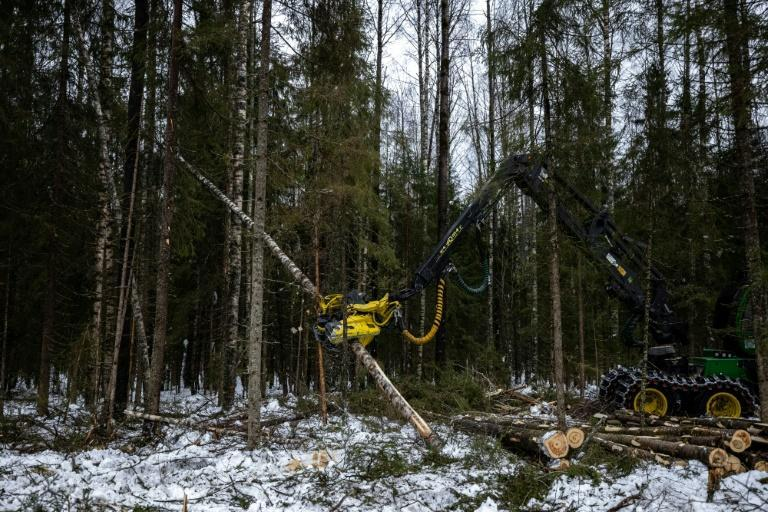 Russia is home to one-fifth of the world's forest and further exploiting this resource could help the country cut down its economic reliance on oil and gas.