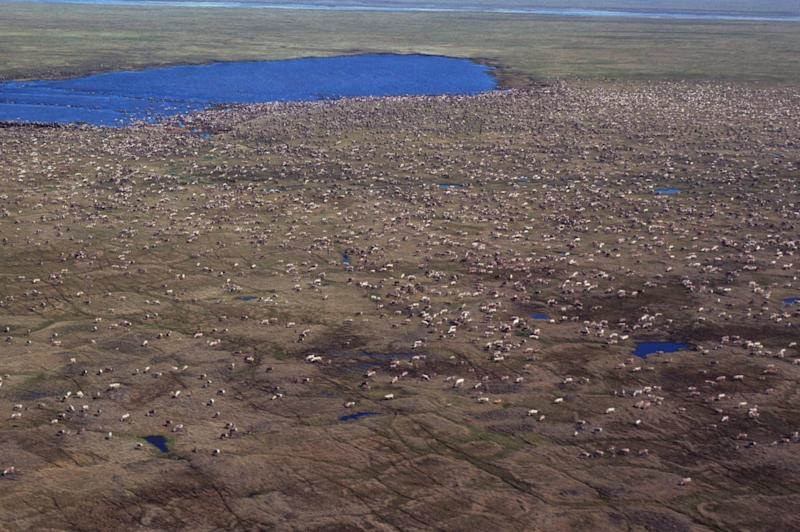 Arctic refuge drilling closer as Senate panel backs bill