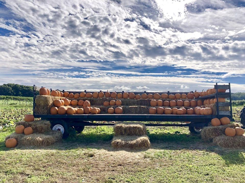 """<p><strong>South Natick, Massachusetts</strong></p><p>As one of the oldest continuously working farms in the country, the <strong><a href=""""http://lookoutfarm.com/"""" rel=""""nofollow noopener"""" target=""""_blank"""" data-ylk=""""slk:Belkin Family Lookout Farm"""" class=""""link rapid-noclick-resp"""">Belkin Family Lookout Farm</a> </strong>offers a variety of activities for kids and families to enjoy<strong>, </strong>including a U-Pick farm, a barnyard play area, train rides and more! Pricing can be found on the Belkin Family Lookout Farm's <a href=""""https://www.lookoutfarm.com/hours-pricing"""" rel=""""nofollow noopener"""" target=""""_blank"""" data-ylk=""""slk:website"""" class=""""link rapid-noclick-resp"""">website</a>. </p><p><strong>RELATED: </strong><a href=""""https://www.goodhousekeeping.com/food-recipes/g2767/pumpkin-seed-recipes/"""" rel=""""nofollow noopener"""" target=""""_blank"""" data-ylk=""""slk:27 Tasty Recipes to Make With Pumpkin Seeds"""" class=""""link rapid-noclick-resp"""">27 Tasty Recipes to Make With Pumpkin Seeds</a></p>"""