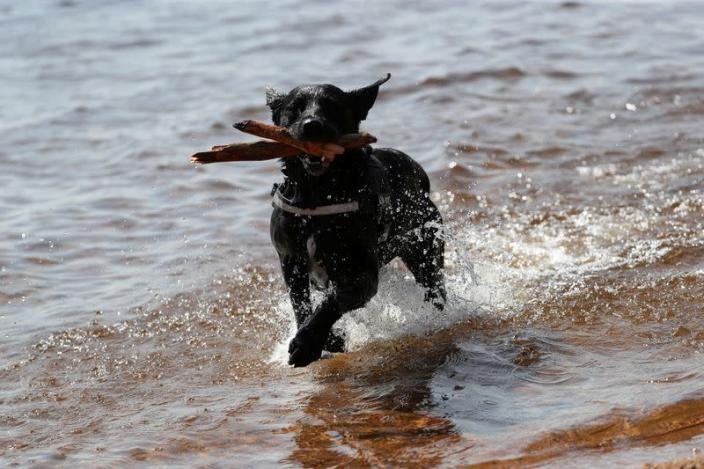 FILE PHOTO: A dog runs through the water at Loch Morlich, near Aviemore