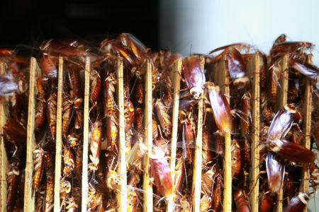 Cockroaches are seen among cardboards at a farm operated by pharmaceutical company Gooddoctor in Xichang, Sichuan province, China August 10, 2018.  REUTERS/Thomas Suen