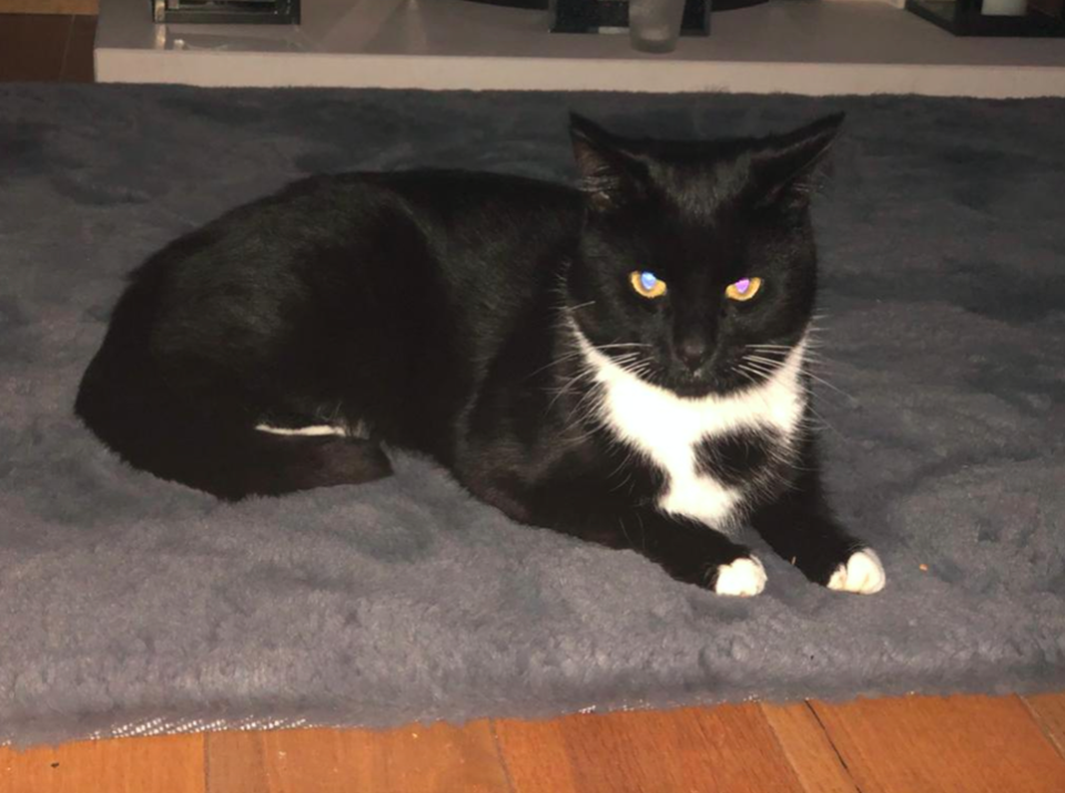 The owners of the cat took their dead pet to the vet, who confirmed it had been shot with a pellet and had died due to the extent of its injuries. (PA)