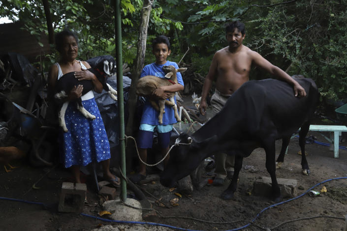 """Ines Flamenco, from left, her grandson Daniel, and her son Mauricio Flamenco, pose for a photo with their farm animals on their land in Los Angelitos, El Salvador, Wednesday, Aug. 4, 2021. Flamenco is one of a group of landslide survivors who returned the home in a middle-class residential community given to her by the government. """"The house is beautiful, but I feel depressed, it is not for me. I want to ask the government if they could look for a place in the countryside,"""" she said. (AP Photo/Salvador Melendez)"""
