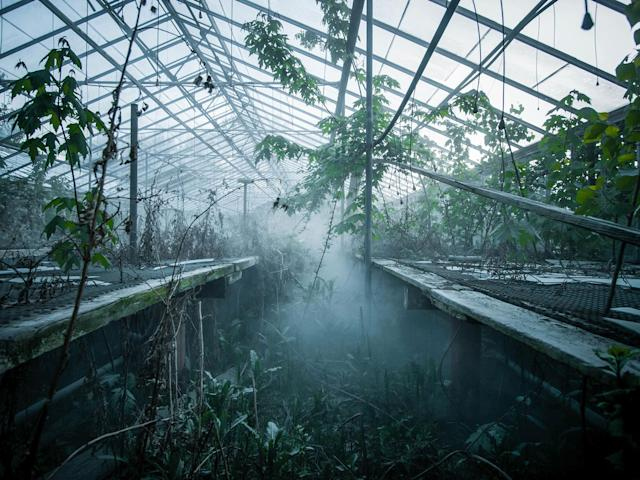 <p>Derelict and overgrown plant nursery in Ohio. (Photo:Johnny Joo/Caters News) </p>