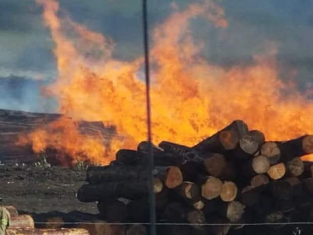 A fire burns in a log yard in Chetwynd, B.C. (Submitted - image credit)