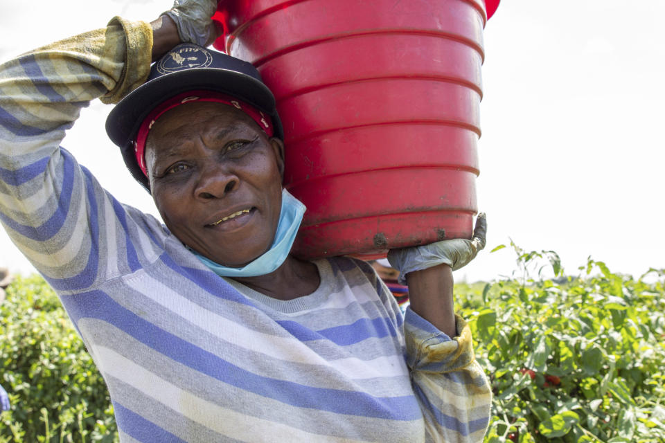 In this March 24, 2021 photo, a farmworker poses for the camera holding a bucket of harvested tomatoes at a farm in Delray Beach, Fla. Many U.S. health centers that serve agricultural workers across the nation are receiving COVID-19 vaccine directly from the federal government in a program created by the Biden administration. But in some states, farmworkers are not yet in the priority groups authorized to receive the shots. (AP Photo/Cody Jackson)