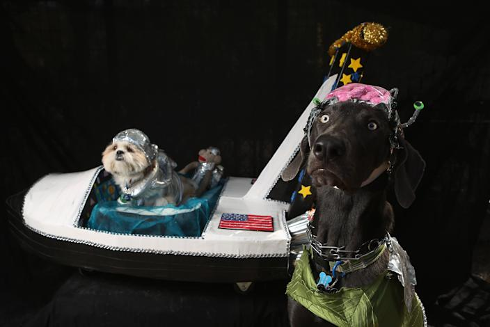 Weimeraner Zeus and Pachino, a shih tzu, pose with their space ship at the Tompkins Square Halloween Dog Parade. (Photo by John Moore/Getty Images)