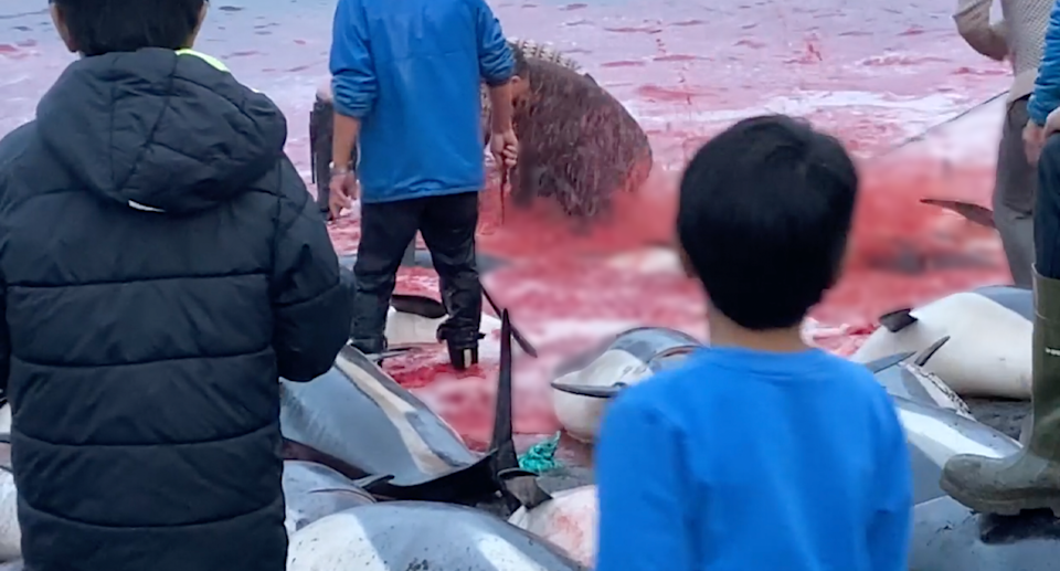 Video showed knives used to slaughter dolphins as locals, including children, watched on. Source: Sea Shepherd