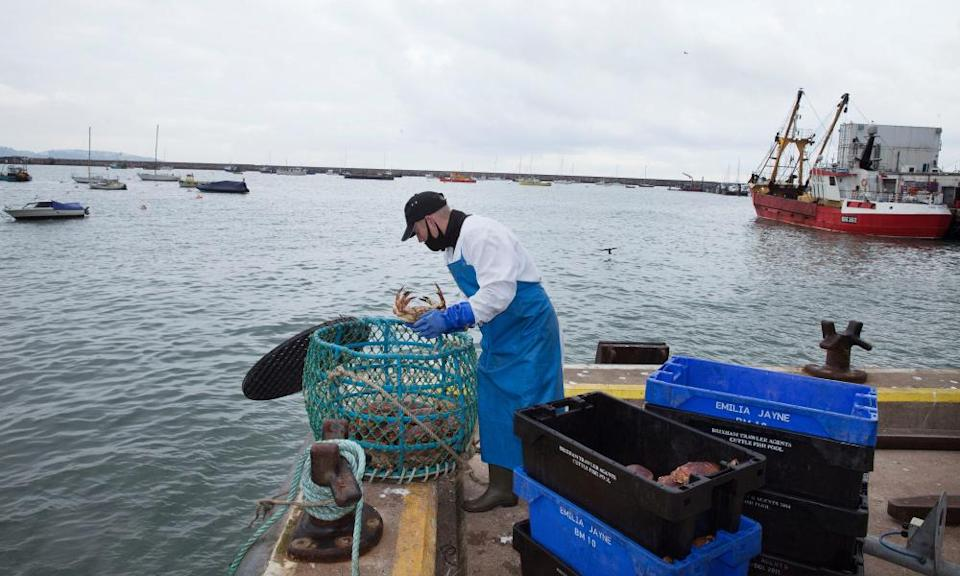 Crabs being unloaded at Brixham harbour.