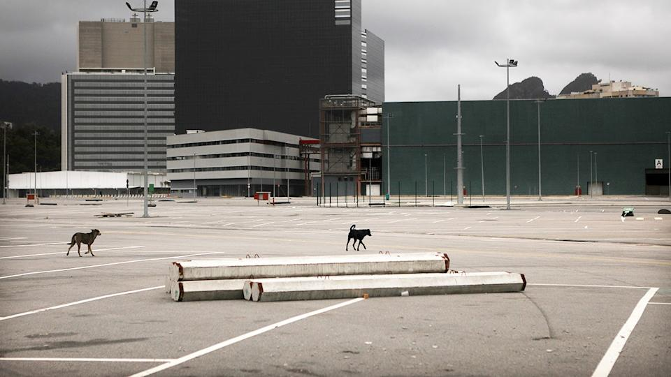 Dogs walk through the abandoned Olympic Park in Rio de Janeiro. (Mario Tama/Getty Images)