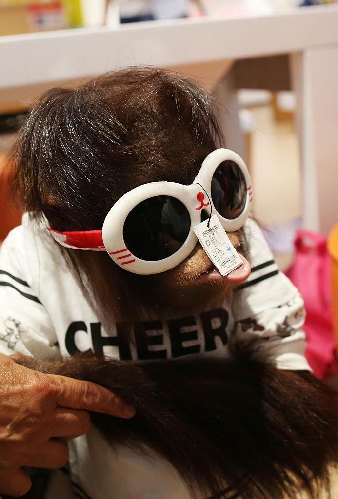 Three-year-old Er Mao tries on sunglasses at a shopping center in China. (Photo: Getty Images)