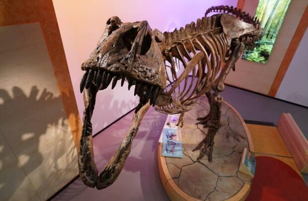 The king carnivore was discovered in the badlands just outside Eastend, Sask., in 1991. (Matt Howard/CBC - image credit)