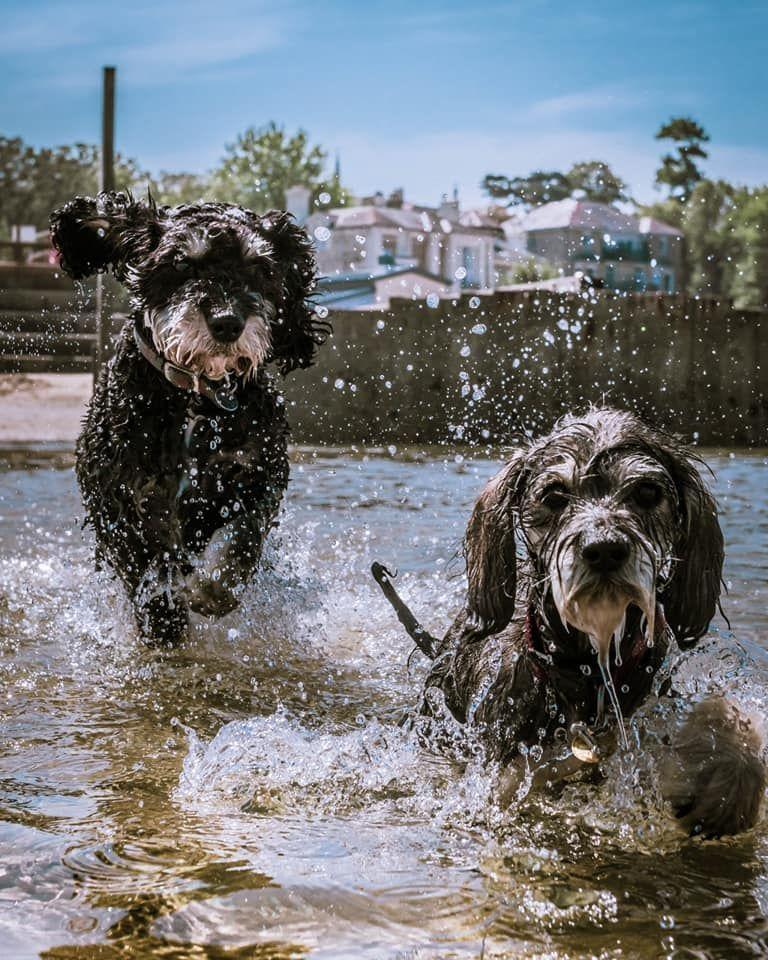 <p>This adorable doggy duo look like they're having great fun splashing around outside. </p>