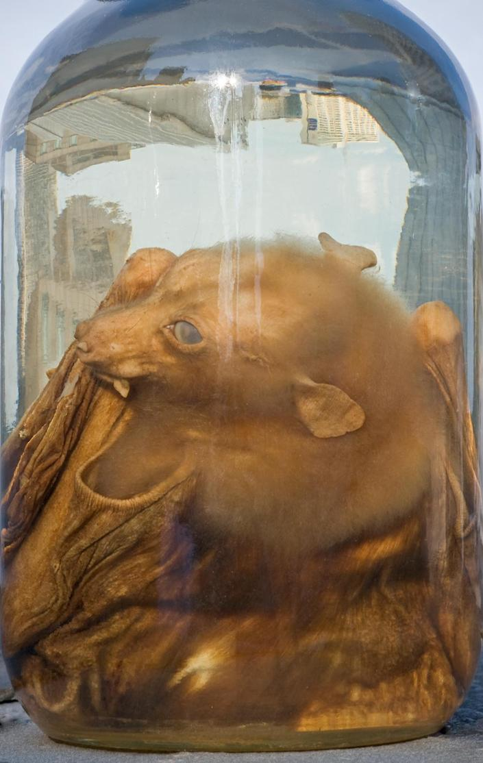 <p>Bat in bottle, Academy of Natural Sciences, Drexel University. (Photograph by Rosamond Purcell/Courtesy of BOND/360) </p>