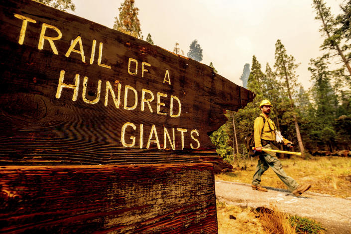 A firefighter battles the Windy Fire burning in the Trail of 100 Giants grove of Sequoia National Forest, Calif., on Sunday, Sept. 19, 2021. (AP Photo/Noah Berger)
