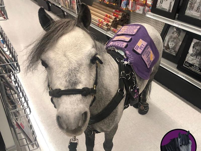 Viral: Miniature horse on American Airlines flight goes viral