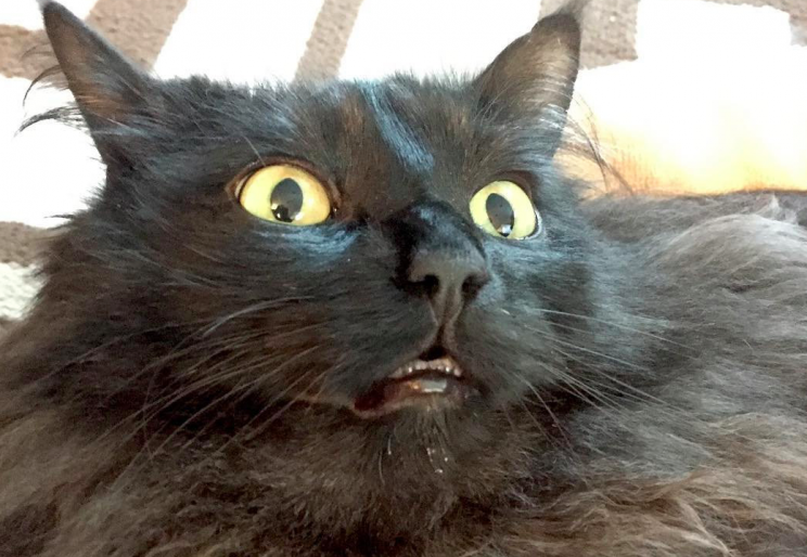 trooper the wobbly cat has a condition which means he falls over 30