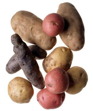 """<div class=""""caption-credit""""> Photo by: Brian Hagiwara/Getty Images</div><div class=""""caption-title""""></div><b>Potatoes</b> <br> Refrigeration adversely affects their flavor, so store in the pantry in paper bags (plastic bags trap moisture and speed decay). Most varieties should last three weeks. <br> <br> <b>Also See</b>: <a rel=""""nofollow"""" href=""""http://www.realsimple.com/home-organizing/organizing/kitchen/purge-pantry-00000000038421/index.html?xid=yshi-RS-100812-dont-refrigerate"""" target=""""_blank"""">Purge Your Pantry</a>"""
