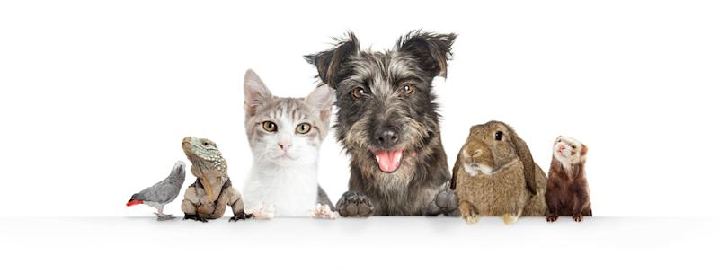 Common cute domestic animal pets hanging over a white horizontal website banner or social media cover
