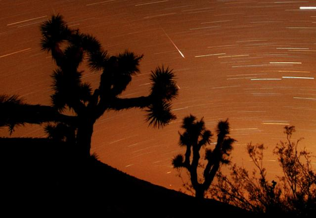 Several Leonids meteors are seen streaking through the sky over Joshua Tree National Park, Calif., looking to the south in the Southern California desert in this approximately 25-minute time exposure ending at 3:45 a.m. PST (11:45 UT) Sunday, Nov. 18, 2001. Two are visable at center, one partly hidden behind a Joshua tree branch. Two more faint meteors are just above the scrub brush at lower right, and two other faint meteors appear at top and center left.. The Leonid shower occurs each November, whenthe Earth's orbit takes it through a trail of dust particles left by the Comet Tempel-Tuttle, which swings around the sun once every 33 years. The horizontal streaks are stars and or planets. (AP Photo/Reed Saxon)
