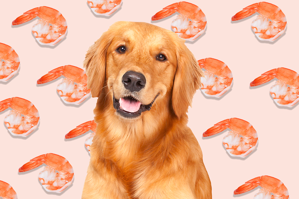 can dogs eat shrimp graphic golden retriever in front of shrimp