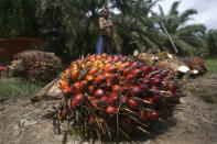 A worker loads heavy bunches of palm oil fruit into a cart on a palm oil plantation in Sumatra, Indonesia, Nov. 13, 2017. Palm oil is virtually impossible to avoid. Often disguised on labels as an ingredient listed by more than 200 names, it can be found in roughly half the products on supermarket shelves and in most cosmetic brands. (AP Photo/Binsar Bakkara)