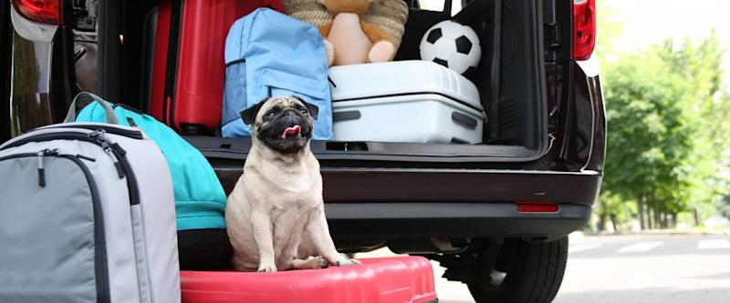 Car trunk with cute pug and luggage