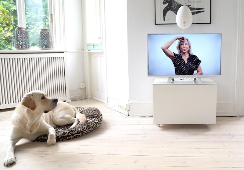 Keep your dogs entertained and stimulated at home with this high-tech experience