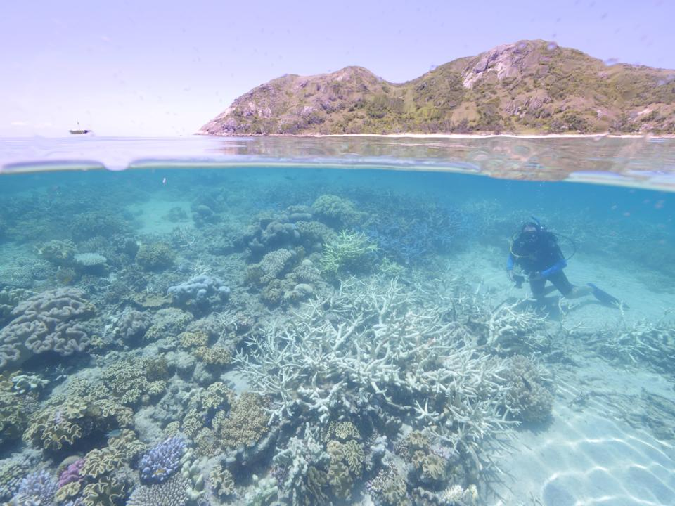 From above the water we look down to see a diver swimming amongst bleached coral with an island in the background.