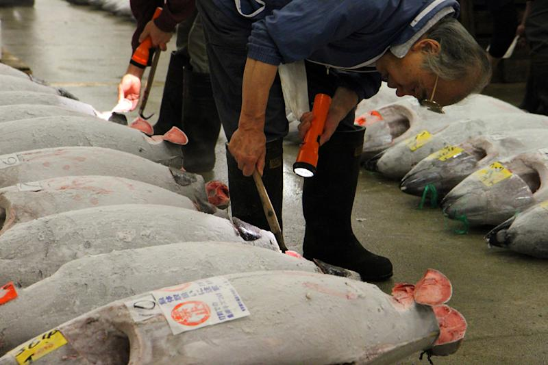 This Oct. 15, 2012 photo shows whole tunas being inspected at the Tsukiji fish market in Tokyo. Tsukiji is the biggest fish market in the world, and tourists willing to line up well before dawn can view the rapid-fire auctions where the giant fish are sold. (AP Photo/Fritz Faerber)