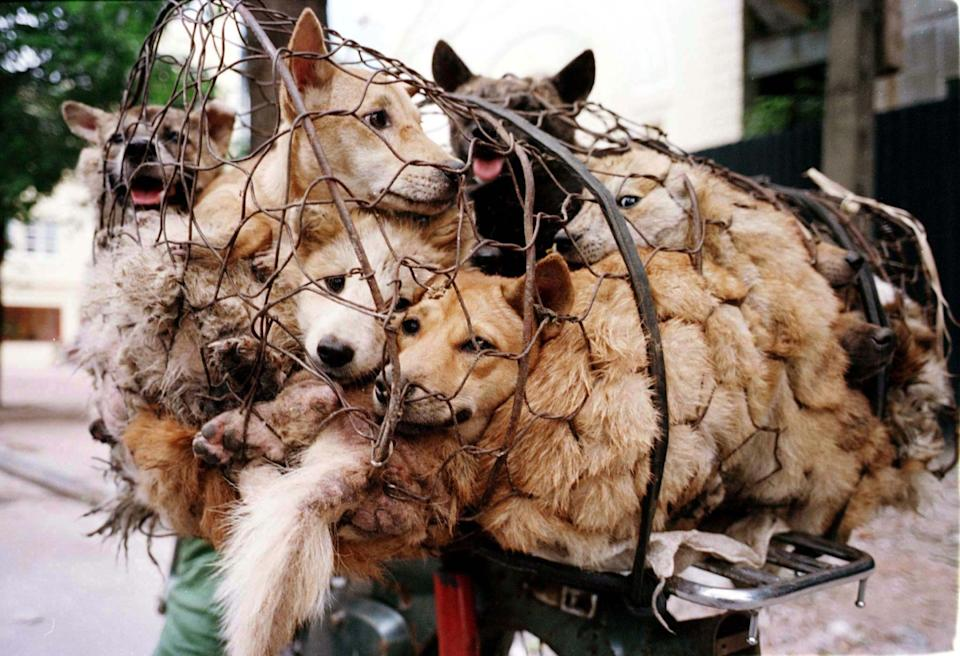 China Dog Meat Festival: Protests Begin as 10,000 Sign Petition Banning Yulin Feast