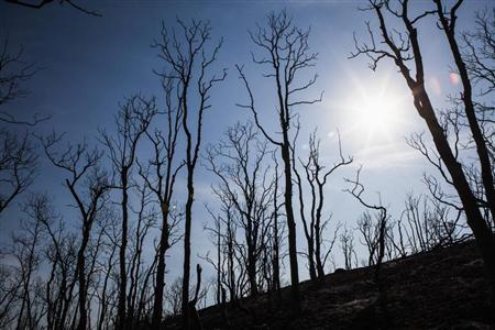 Trees burned by the Clover Fire are seen in Happy Valley, California