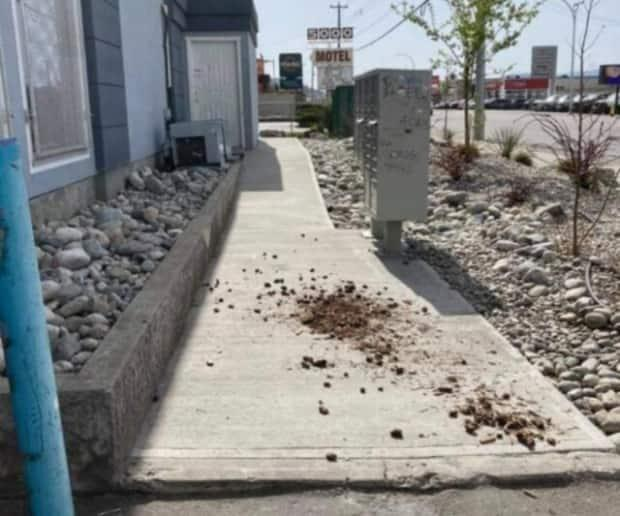 An image posted on social media shows dog feces scattered along the pathway at Compass House Shelter in Penticton, B.C., a facility for homeless people.