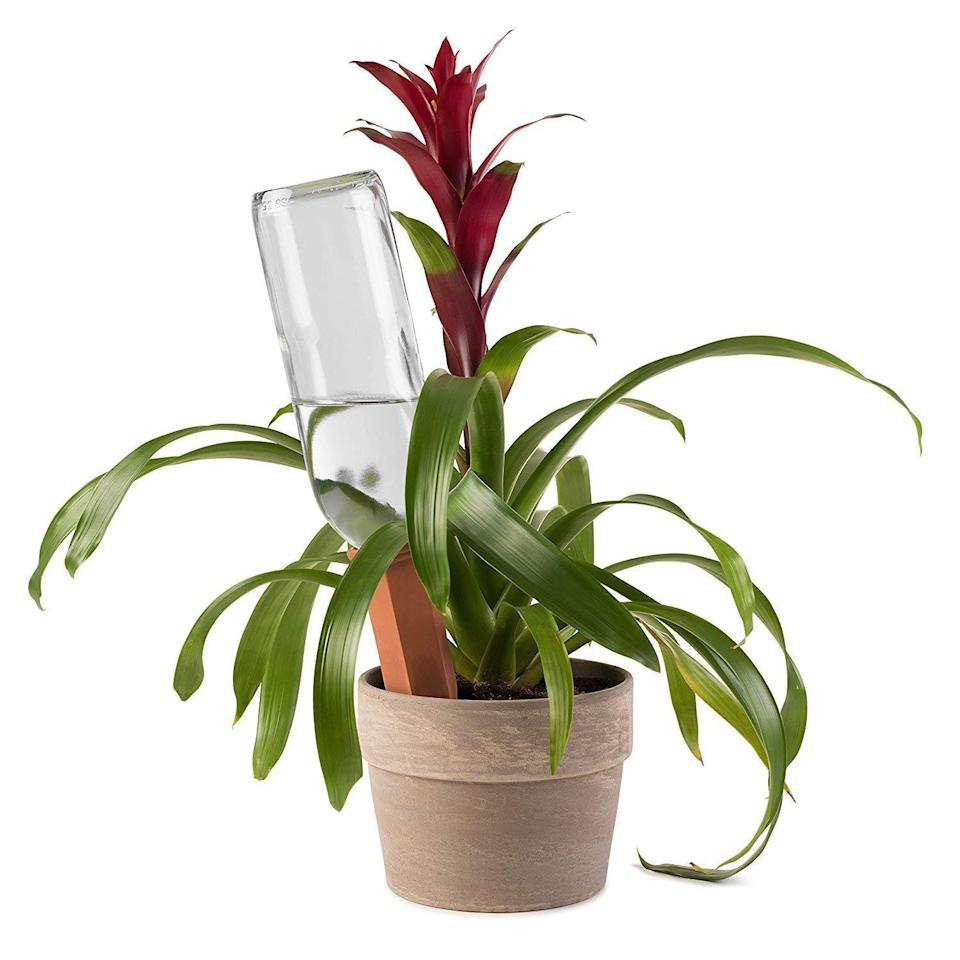 """<h3><a href=""""https://amzn.to/2SIusjF"""" rel=""""nofollow noopener"""" target=""""_blank"""" data-ylk=""""slk:Terracotta Self-Watering Plant Stakes"""" class=""""link rapid-noclick-resp"""">Terracotta Self-Watering Plant Stakes</a></h3><br><strong>Rachel</strong><br><br><strong>How She Discovered It:</strong> """"I can't remember. Maybe my mom. Maybe I read about it."""" <br><br><strong>Why It's A Hidden Gem:</strong> """"Watering stakes to keep my plant babies healthy even when I'm gone — one of those helpful tools to keep my thumb green.""""<br><br><strong>Modern Innovations</strong> Terracotta Self-Watering Plant Stakes (4 Count), $, available at <a href=""""https://amzn.to/2SIusjF"""" rel=""""nofollow noopener"""" target=""""_blank"""" data-ylk=""""slk:Amazon"""" class=""""link rapid-noclick-resp"""">Amazon</a>"""