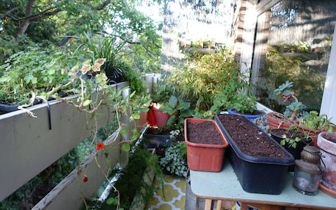 Winter green seeds in troughs line up on the balcony - Credit: Alice Vincent