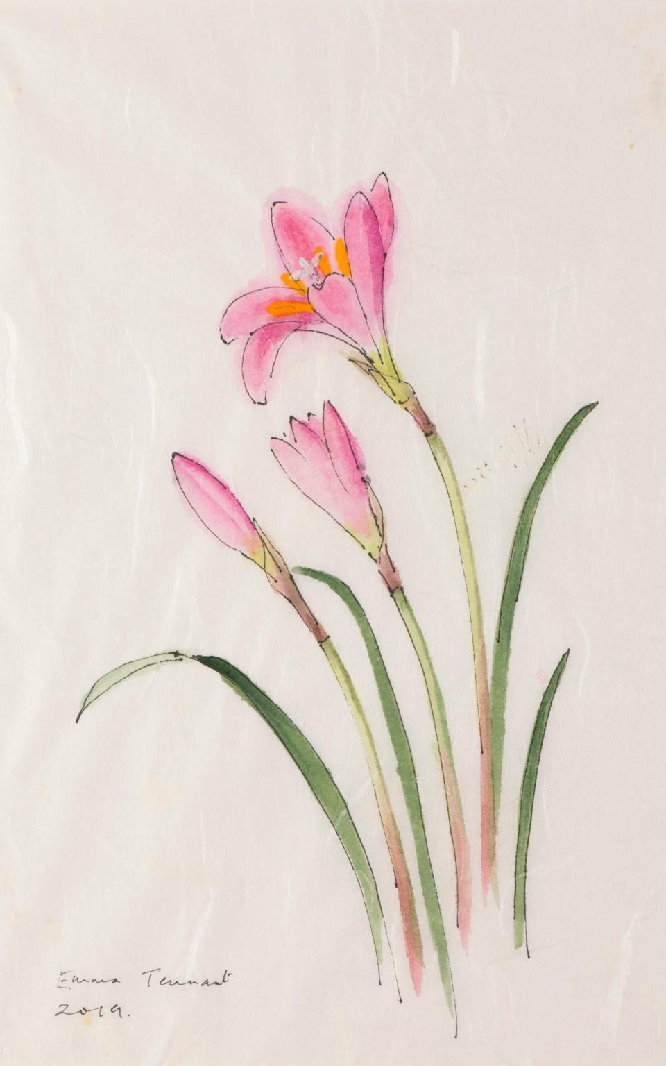 Habranthus robustus painted last year - she grows them in her greenhouse as a reminder, - Emma Tennant