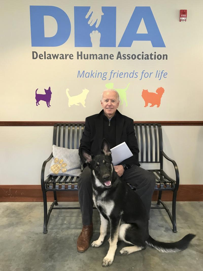 This photo provided by Delaware Humane Association shows former Vice President Joe Biden with his new dog at Delaware Humane Association in Wilmington, Del.  The Delaware Humane Association said Saturday, Nov. 17, 2018 that Biden and his wife, Jill, have adopted a 10-month-old German Shepard named Major.  Director of Animal Care Kerry Bruni said the Bidens had been providing foster care for the dog in their home for several months and were ready to make the adoption official.     (Stephanie Gomez/Delaware Humane Association via AP)