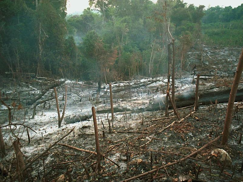Cut it out: Rainforests are being chopped down and replaced by soya crops (AFP/Getty Images)
